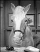 Profile photo:  Mister Ed