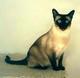 Profile photo:  Belle Riegert Cat