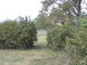 Belle Grove Plantation Slave Cemetery