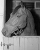 Profile photo:  Seabiscuit