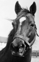 Profile photo:  Man O' War