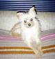 Profile photo:  Gizmo dog