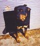 Profile photo:  Sable dog