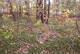 Birch Run Hidden Cemetery