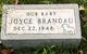 Joyce Brandau