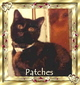 "Patches ""My Fur Baby"" Cordeiro"
