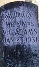 Infant Daughter of Mr. & Mrs V.C. Adams
