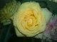 Profile photo:  Rose <I>Pilla</I> Arrigale