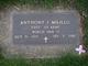 Anthony J Milillo