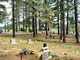 Whispering Pines Cemetery
