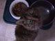 Profile photo:  Velcro Kitty Colvin