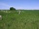 Lisa A Johnson Burial Site