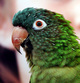 Profile photo:  A Conure Named Charley
