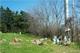 Branscom Cemetery
