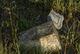 Profile photo:  Grave 03 Unknown