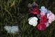 Profile photo:  Grave 08 Unknown