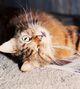 Profile photo:  Garfield Maresca