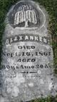 "Profile photo:  Alexander ""Alex"" Ankeny"