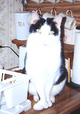 Cat Leroy Brown