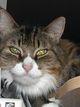 Profile photo:  Fluffy Boy Mancino