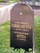 Profile photo:  Anttila