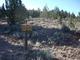 Lost Meek Rimrock Springs Burial Site