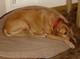 Profile photo:  Copper Ansel