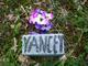Profile photo:  Yancey