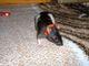 Bettina Rat