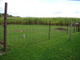 Township Amish Cemetery