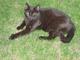 Profile photo:  Cocoa (Cat)