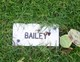 Profile photo:  Bailey