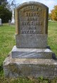 William Harrison Stout