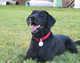 Marley (Canine) Bogush
