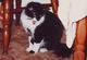 Algernon Cat