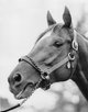 Photo of  Whirlaway