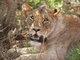 "Profile photo:  Narika ""The Lioness"""