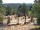 Harris Cemetery