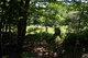 Tenney-Driscoll-Allen Cemetery