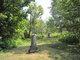 Newton Cemetery