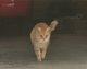 Ernge <I>Cat</I> Bilhimer