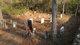 Bolen-Beaty Family Graveyard