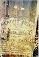 Merritt Rose