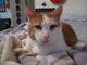 Profile photo:  Critter Katt