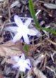Angelsea