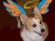 """Profile photo:  Charlene Sligo """"Charlie"""" Dog"""