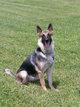 Cooler Nite K-9 Dog