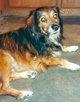 """Profile photo:  Anna """"Anna Banana"""" Dog"""