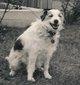 Profile photo:  Tiny Dog