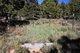 Siler Ranch Cemetery